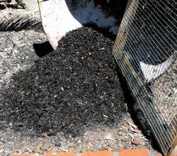 Backyard compost