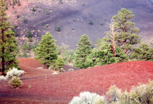 At the base of the cinder cone. There is a loop trail there.