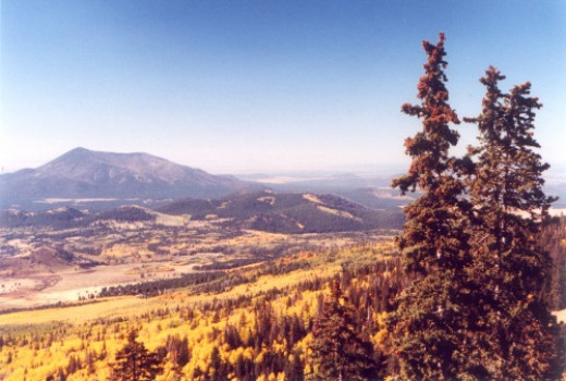Autumn aspens in San Francisco Peaks, looking toward a distant mountain, taken from the ski lift. The pines are dead from lack of rain.
