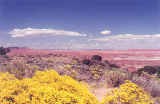 Painted Desert with spring flowers.