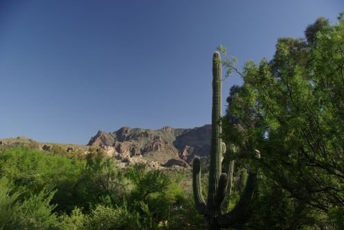 Mountains with a saguaro.
