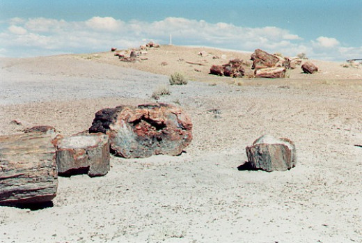 Petrified Forest, log sections.