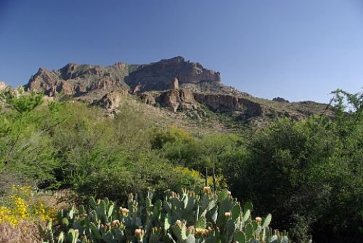 Mountains with a prickly pear in the foreground.