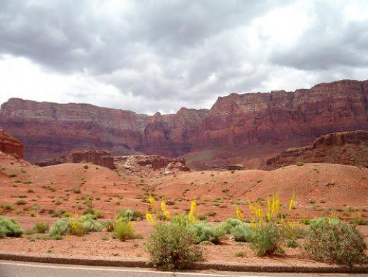Glen Canyon with Princes Plume. Part of the Vermilion Cliffs area.