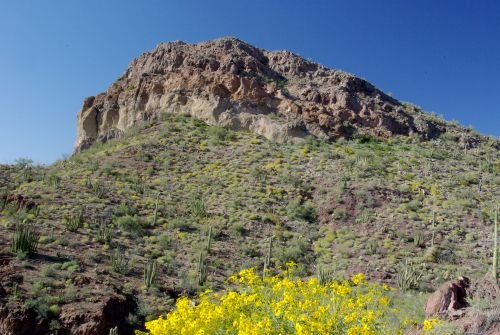 Brittlebush with a peak in the background.