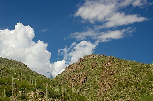 Lower elevations are covered with Saguaros.