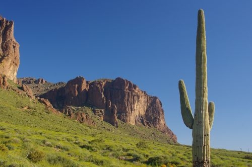 View within the Lost Dutchman State Park. That is a Saguaro on the right.