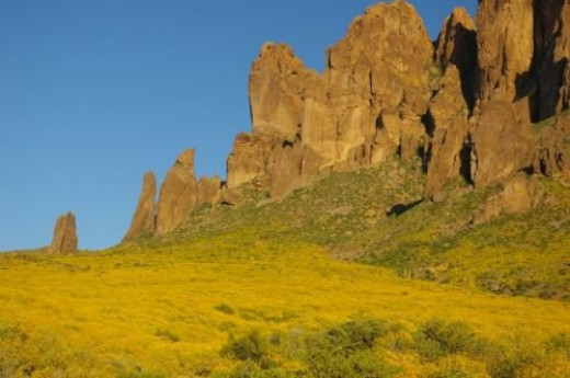 Another view in the park. The yellow flowers are Brittlebush.