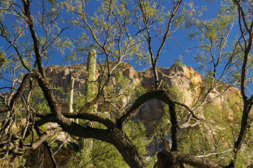 Neat view through tree at cactus and rocks.