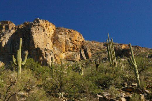 Still more rocks and saguaros.