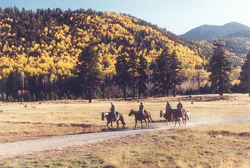 A fall scene with four horses and riders.