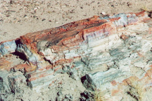 Petrified wood up close. I THINK that is probably agate. But I'm not sure.