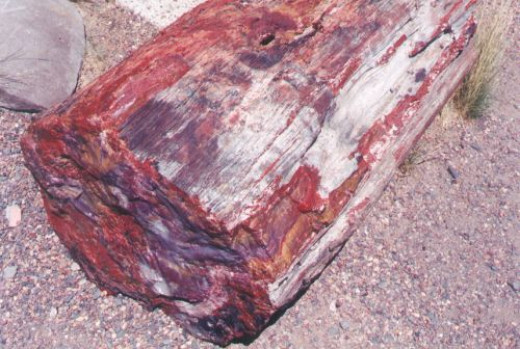 Another log. You begin to see the brilliant colors.