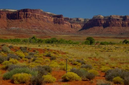 Desert shrubs.