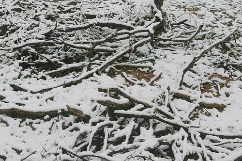Old branches covered with snow. Leftovers from my firebreak clearing project.