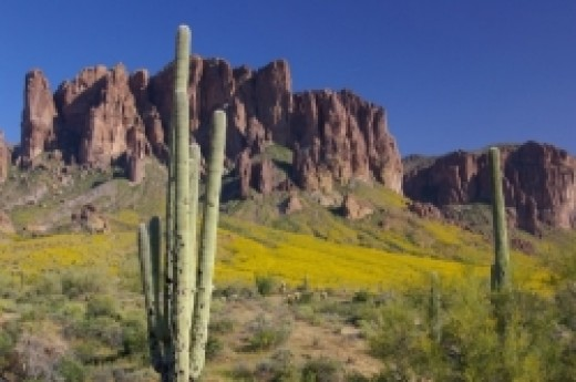 Superstitions with Saguaro