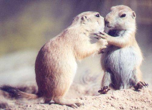 Prairie Dog babies.