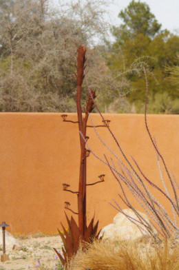 Rusty agave in bloom.
