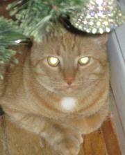 Mog at home, Christmas 2011.