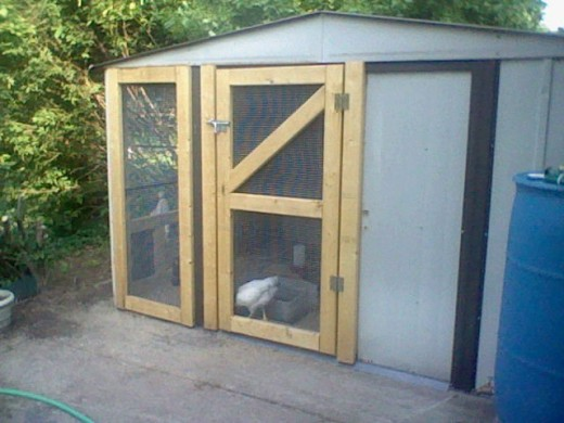 From Old Metal Shed to Trendy Chicken Coop
