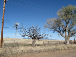 A windmill and tree on a ranch in the San Raphael Valley of southern Arizona.