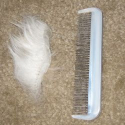 Cat comb with hair.