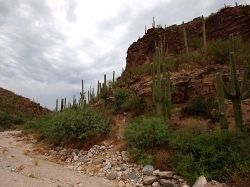 Sabino Canyon scenery, Tucson, Arizona.