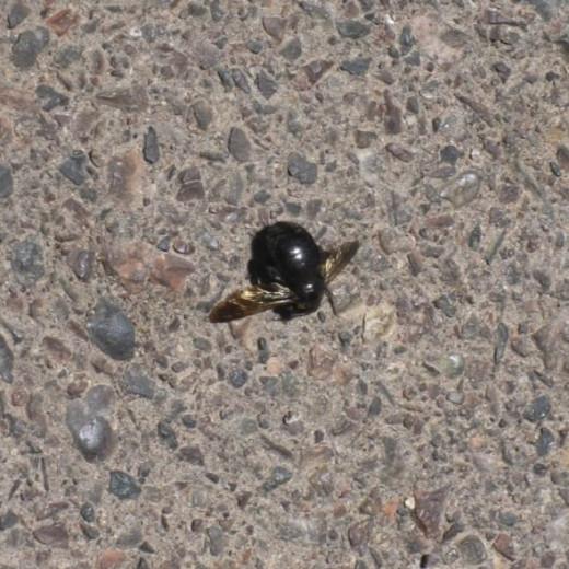 Dead bug.