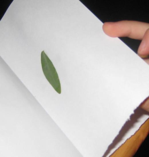 Small leaf.