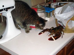 New Mexican Lobster playing with cat...Note how no water is needed!!