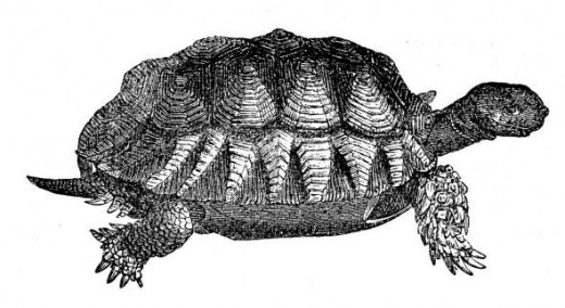 Vintage turtle image courtesy of The Graphics Fairly. Click the image to visit the Web site.