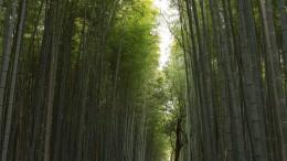 The bamboo forest in Arashiyama, a suburb of Kyoto. Beautiful at any time of the year!