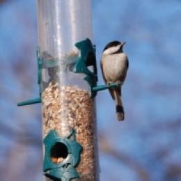 Backyard bird feeding