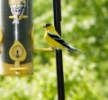 Niger birdseed feeder