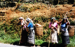 Methods of gathering tea remain essentially the same for centuries.