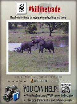 Elephants on Tembe Cam
