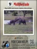 Africam Live Webcams From Africa