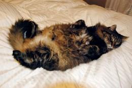Choosing a Down Comforter
