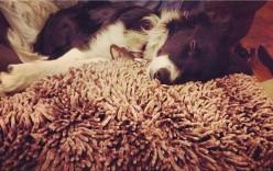 Dog Friendly Sofas
