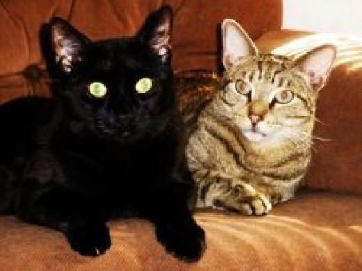 Two of my Kitties