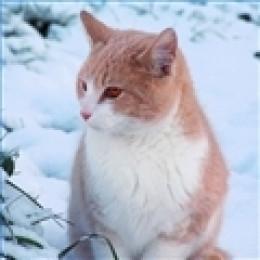 Winter Kitty