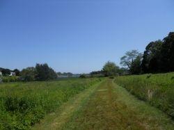 Mowed hiking path