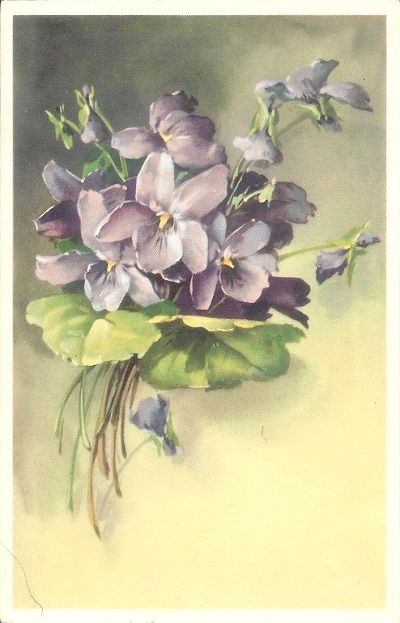Violet-Postcard