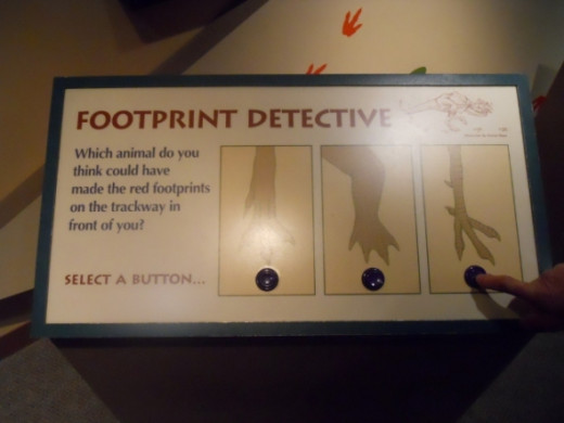 Here is the second Footprint Detective when you push the button and guess a wall sign lights up.   See the next picture.