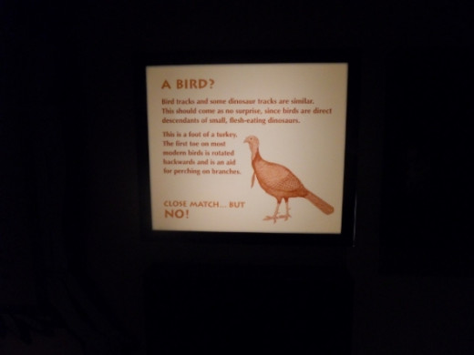 "We selected ""Bird"" on the Footprint Detective and this sign lit up above us"