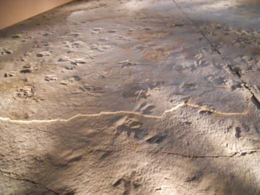 A view of the trackway and actual dinosaur footprints