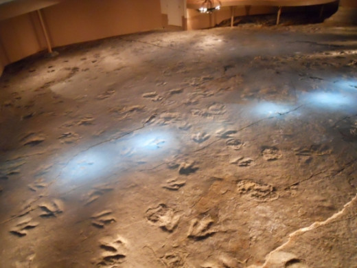 There are buttons you may push along the trackway and it lights up the footprints made by one animal.