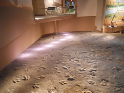 Here's another example of the path of one particular dinosaur lit up.