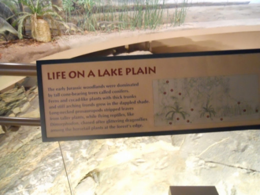 Information on life on a lake plain.