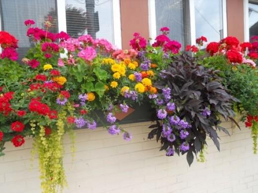 Window-Box-Daily-Adirondack- Enterprise-